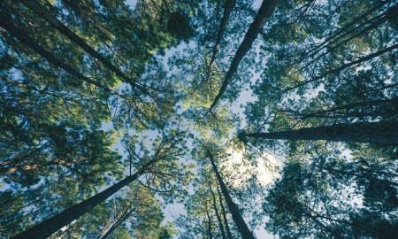 Hutan-Hutan Paling Hits di Indonesia untuk Warnai Media Sosialmu
