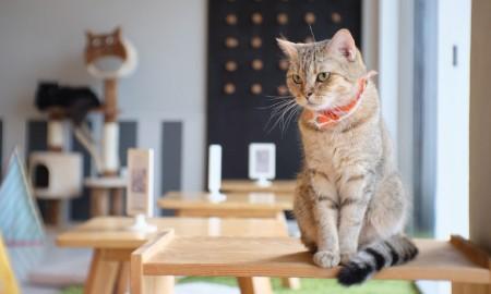 #PilihYangBeda Jelajahi 5 Kafe Kucing yang Menggemaskan